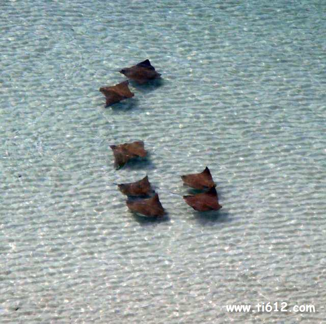 Click here to see a video from our balcony of a school of stingrays swimming by